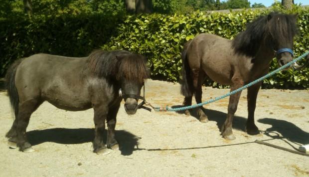 Pony Vendita